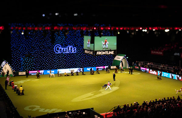 Crufts main arena