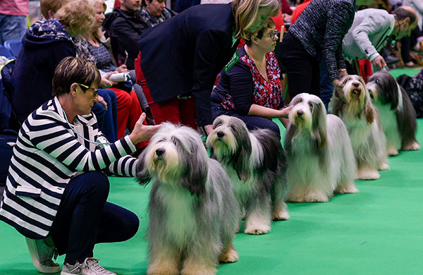 Owners showing their dogs