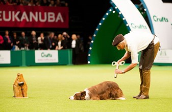 Plan your visit to Crufts 2020