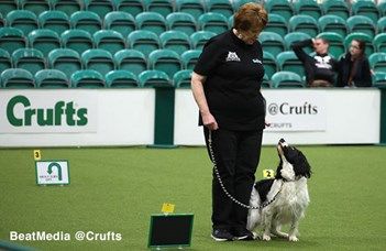 Rally competitions at Crufts